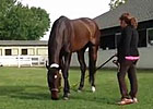 Royal Delta Grazes at Belmont Park 6/6/2013
