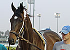 Morning Line Goes to Dubai - Royal Delta