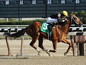 Rule by Night wins the 2010 Groovy Stakes.