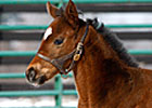 Run Away and Hide's First Foal Is a Filly