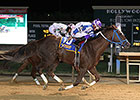 WV-Bred Rematch Spices CT Classic Undercard