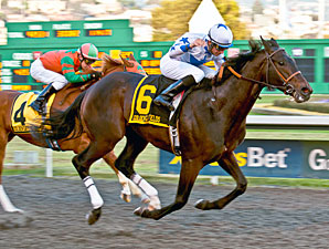 Hollendorfer Duo Tops El Camino Real Derby