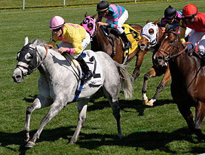 Silver Timber Looks to Axe Turf Sprint