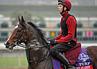 Trainer O&#39;Brien Ready with Two &#39;Turf&#39; Stars
