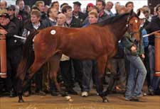 Record Filly Fuels Tattersalls Business