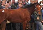 Sadler's Wells Filly Brings World-Record Price at Tattersalls