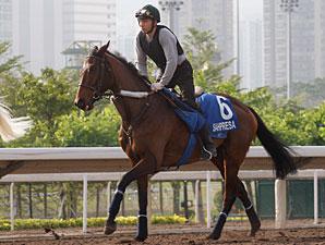 Sahpresa - Hong Kong, December 7, 2011.