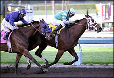 Saint Afleet Takes Wing in Palos Verdes
