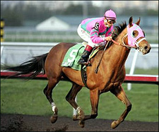 Mandella Pair Work Toward Santa Anita Handicap