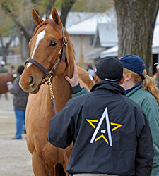 Top Price of $170,000 at Keeneland Auction