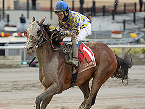 Salutos Amigos wins the 2014 Fall Highweight Handicap.