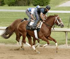 Pletcher-Trained Sam P. Sharp in Churchill Drill
