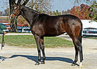 Full Sister to Rachel Alexandra Set for Debut