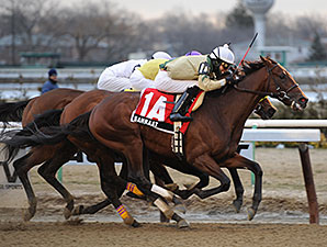 Samraat wins the 2014 Gotham Stakes.
