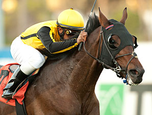 Sanagas wins the 2011 Hollywood Turf Cup.