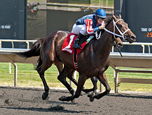 Sandia Crest wins the 2012 Springfield Stakes.