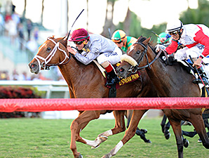 Sandiva wins the 2014 Tropical Park Oaks.