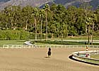 Horses Set to Work at Santa Anita