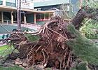 Winds Cause Minor Damage at Santa Anita
