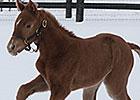 First Foal for Grade II Winner Santiva