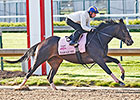 Sarah Sis: Sibling With a Shot in the Oaks