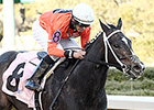 Sarah Sis Being Pointed to Test Stakes