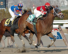 Lexington for Gotham Winner Saratoga County