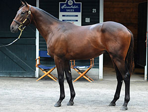 Another High Six-Figure Bernardini Colt