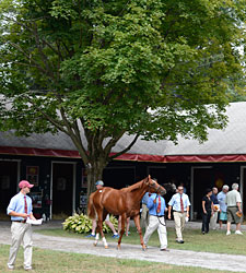 Horsemen's Profits Fall at Saratoga Sale