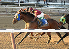 Sassicaia Rallies to Victory in Toboggan