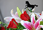 Slideshow: 2013 Kentucky Derby Week