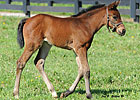 Sea The Stars Filly Born at Lane&#39;s End