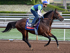 Secret Circle works towards the Breeders' Cup.