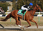Secret Gypsy Earns Grade in Distaff H.