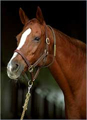 Secrettame, Dam of Gone West, Dies at 28