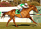 Seek Again Sneaks to Hollywood Derby Surprise