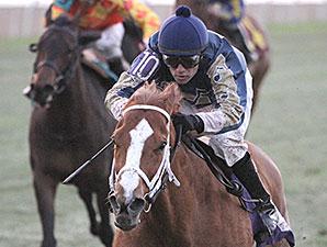 Seeking Ms Shelley wins the 2014 Pan Zareta Stakes.