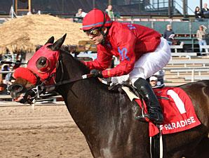 Set'n On Ready wins the 2012 Arizona Juvenile Fillies Stakes.