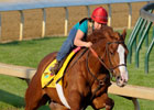 Shackleford Impresses in Kentucky Derby Work