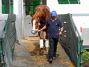 Shackleford Arrives at Belmont Park