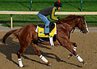 Shackleford&#39;s Preakness Puts Forestry Back On