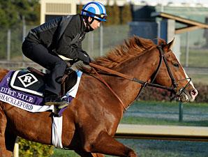 Shackleford - Churchill Downs, Nov 1, 2011.