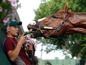 Shackleford - Monmouth Park, July 28, 2011.