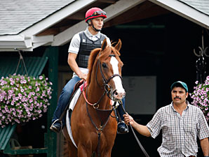 Shackleford Arrives at Saratoga