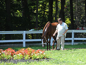 Shackleford - Saratoga August 2, 2012.