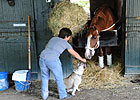 Shackleford Pointed to Kelso, Breeders' Cup