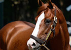 Shackleford&#39;s Fee Set at $20,000 