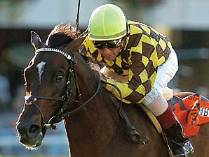 Shakespeare's Stud Fee Lowered to $10K