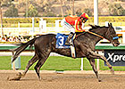 Shakin It Up Hands Baffert a Strub Double