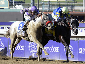 Gutty Shanghai Bobby Wraps Up Juvenile Honors